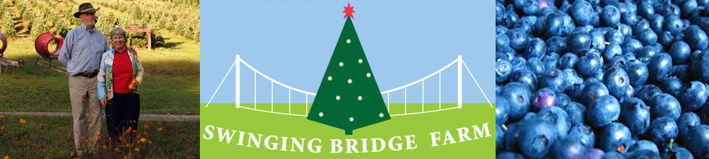 Swinging bridge christmas tree farm